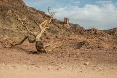 Gel(i)ebte Wüste