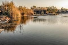Schilf und Wasser im Negev