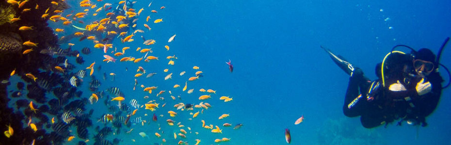 Tauchen im Roten Meer