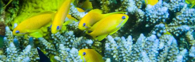 Korallenriff im Roten Meer bei Eilat