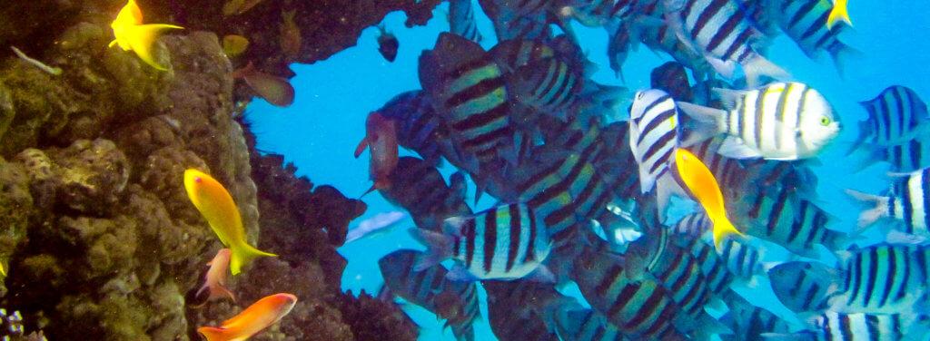 Tauchen am Korallenriff im Roten Meer bei Eilat