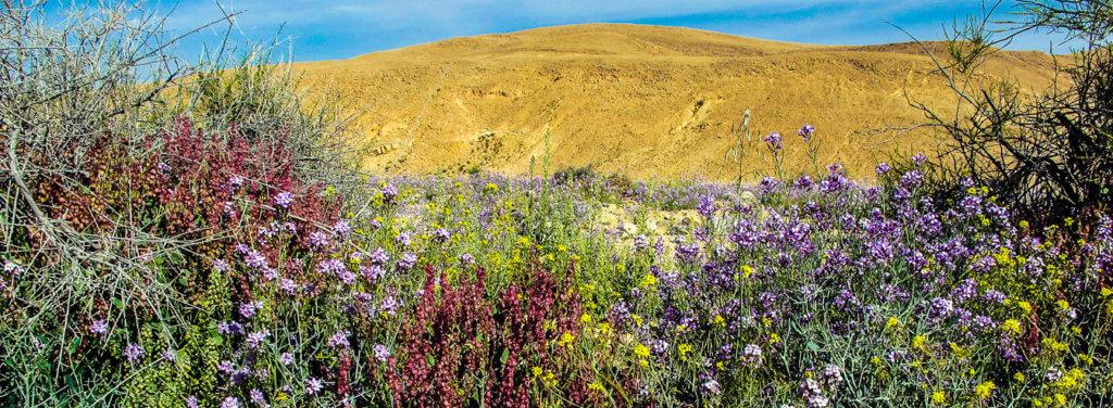 Wüstenexpedition wüste blüht