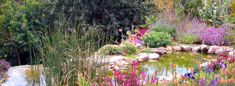 Botanischen Garten Eilat