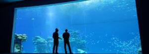 Sehenswürdigkeiten Eilat: Beobachtungsfenster im Hai-Pool